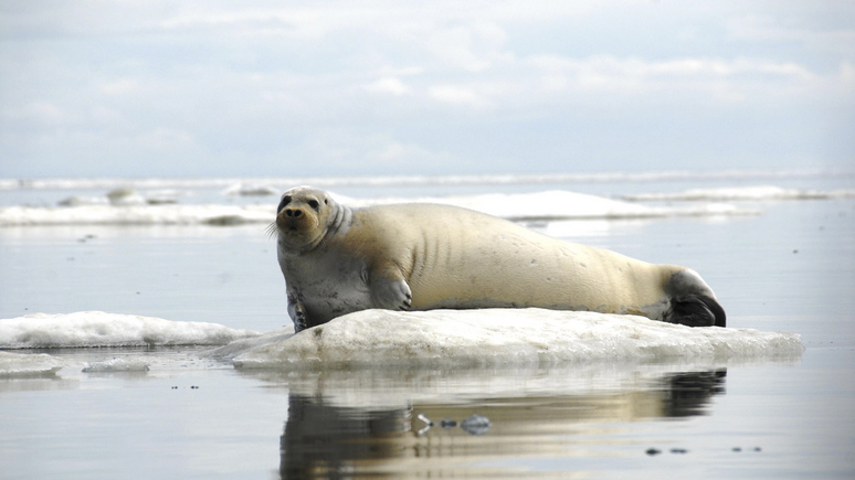 New York Times: в битве за Арктику найден компромисс — рыболовный мораторий