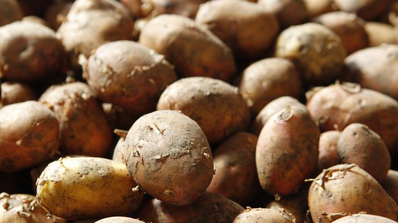 Express: России не нужен белорусский картофель египетского происхождения