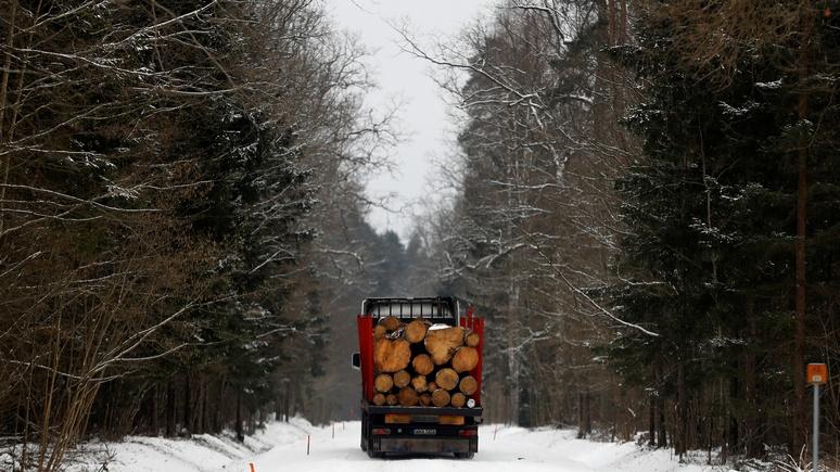 Guardian: Европейский суд признал незаконной польскую «резню бензопилой» в Беловежской пуще