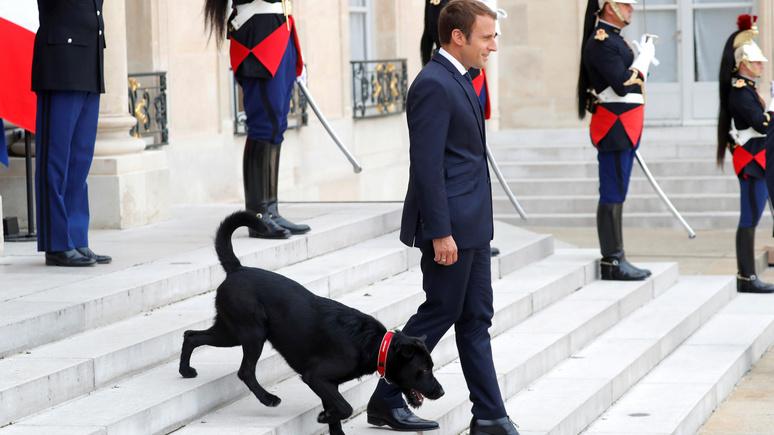 L'Express: собака, две курицы и детёныш панды — питомцы Елисейского дворца улучшают имидж четы Макронов