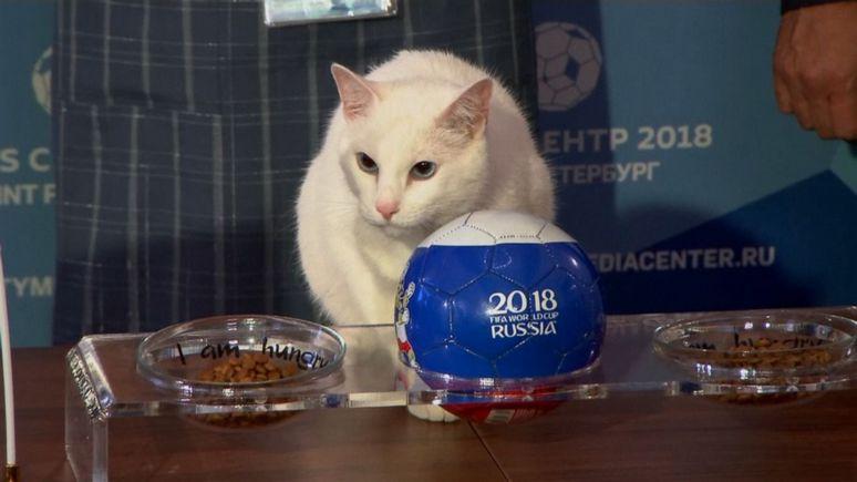 Time: «кот-экстрасенс» предсказал победу российской сборной в первом матче ЧМ-2018