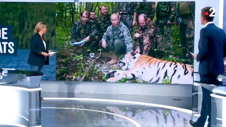 Libération уличила коллег в фабрикации новостей об «охоте Путина на тигров»
