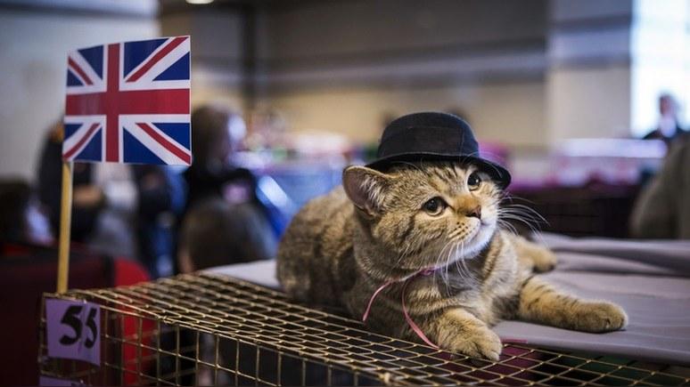 Independent: срыв договора по брекситу прибавит забот владельцам домашних животных