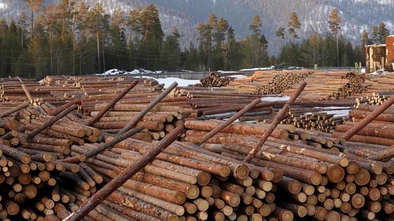Das Erste: реликтовые леса Европы незаконно вырубают ради бумаги