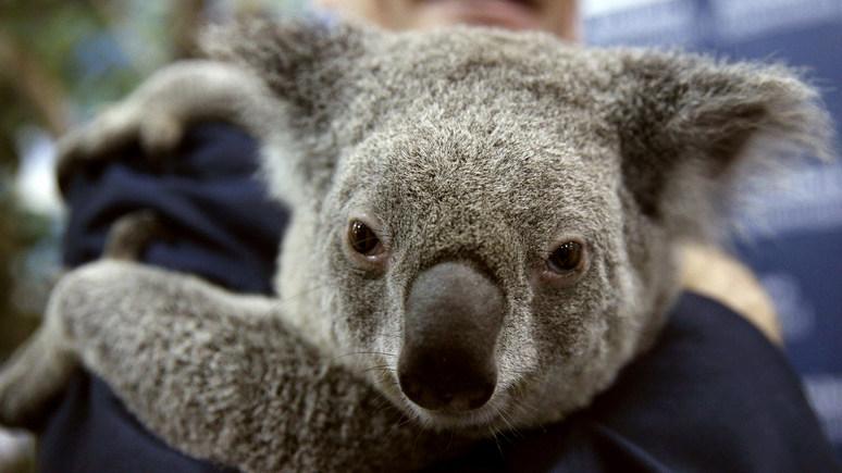 FP: лабрадор, панда и коала — братья меньшие «на службе» международной дипломатии
