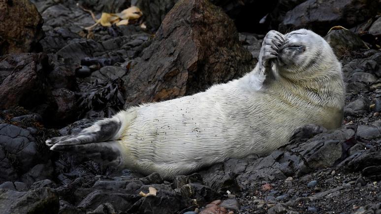 Washington Post: канадский город оказался в плену у тюленей