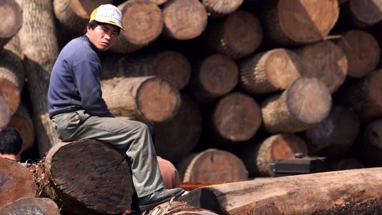 NYT: «неуёмные аппетиты» Китая разоряют российские леса