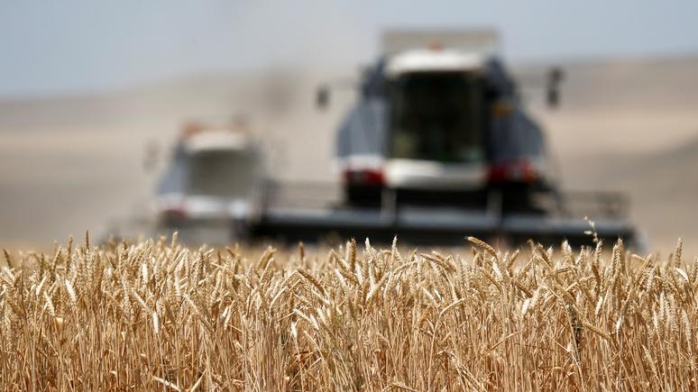 Bloomberg: «мечта хлебопёка» — в России богатый урожай качественной пшеницы