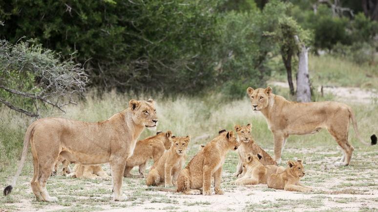 Times: французской паре пришлось отказаться от своего бизнеса из-за фотосессии с охоты на животных в Африке