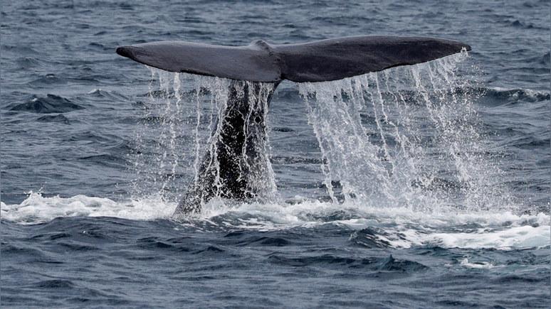 CP предложил объявить бойкот Олимпиаде в Токио — если Япония не прекратит забой китов