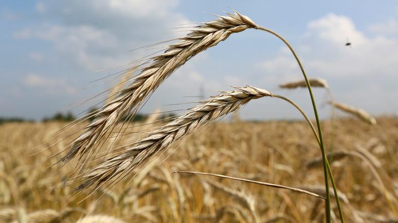 RFI: Саудовская Аравия согласилась импортировать российскую пшеницу