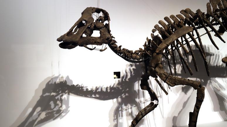 Independent: исследование подтвердило — динозавры не смогли пережить удара астероида в 10 млрд «ядерных бомб»
