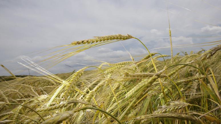 WSJ: успеть до брексита — британские фермеры в спешном порядке распродают свою продукцию