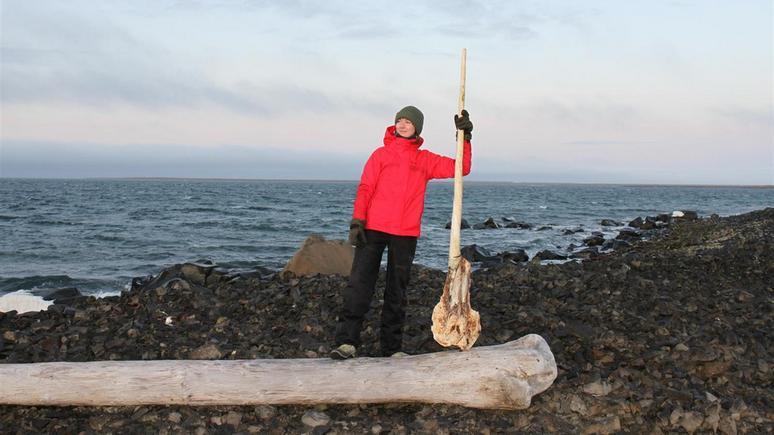 Daily Express: в России нашли редкий череп «арктического единорога»
