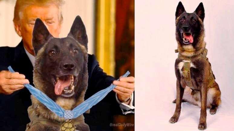 Al Arabiya: Трамп «наградил» героическую собаку за ликвидацию аль-Багдади