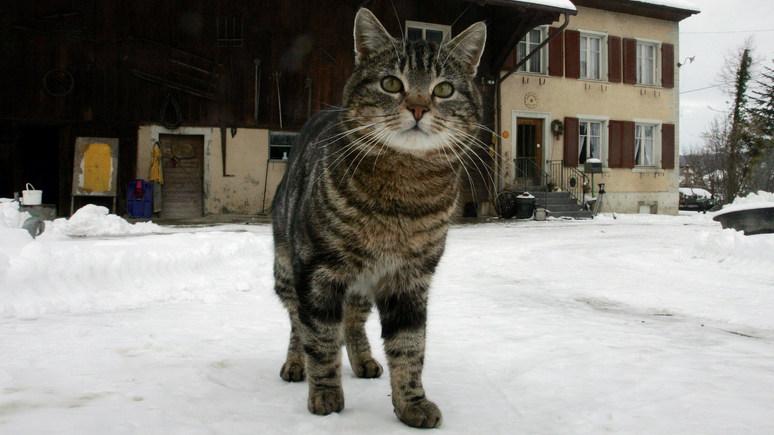 Der Spiegel: в Голландии призвали посадить всех кошек под «домашний арест»