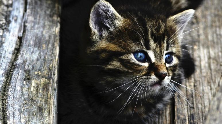 Times: новый закон облегчает миссию Кэтмена по спасению российских котов