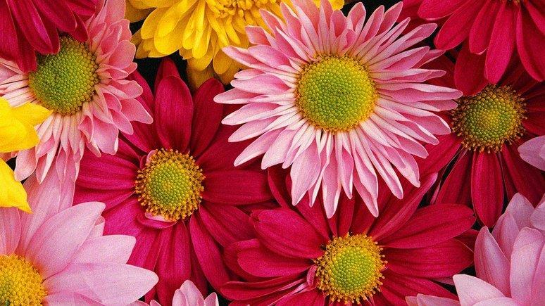 Daily Sabah: цветы из Антальи украсят европейцам Рождество, а россиянам — Новый год