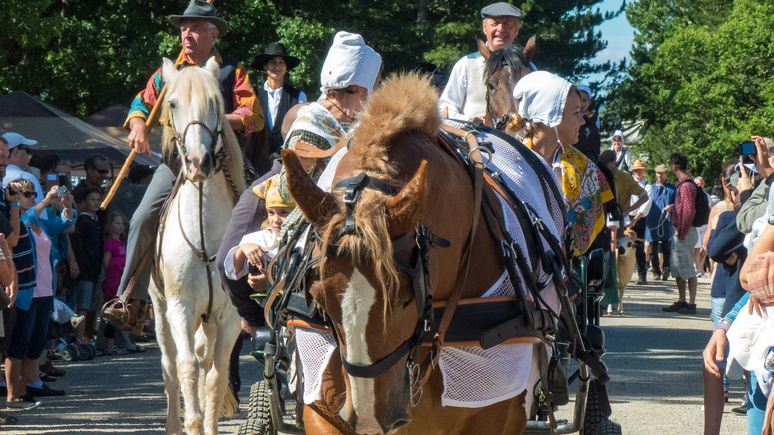 Le Figaro: французские зоозащитники выступили против развоза школьников на лошадиных упряжках