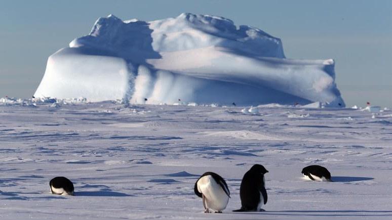 Sky News: всё больше стран видят в Антарктиде не заповедник, а добычу