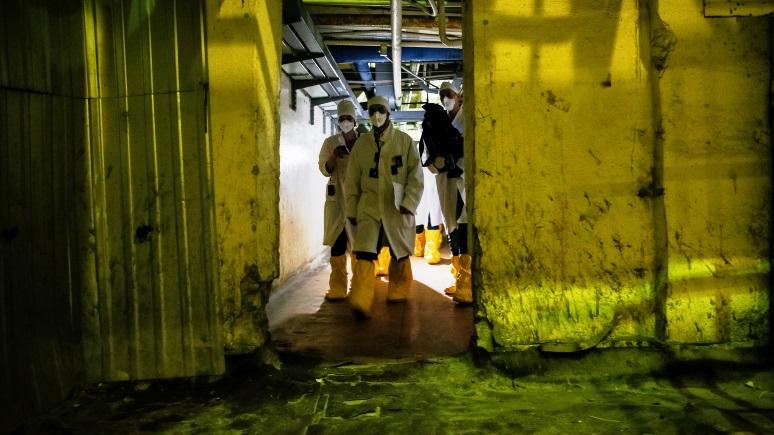 Daily Mail: учёные надеются, что грибы из Чернобыля помогут защитить людей от радиации