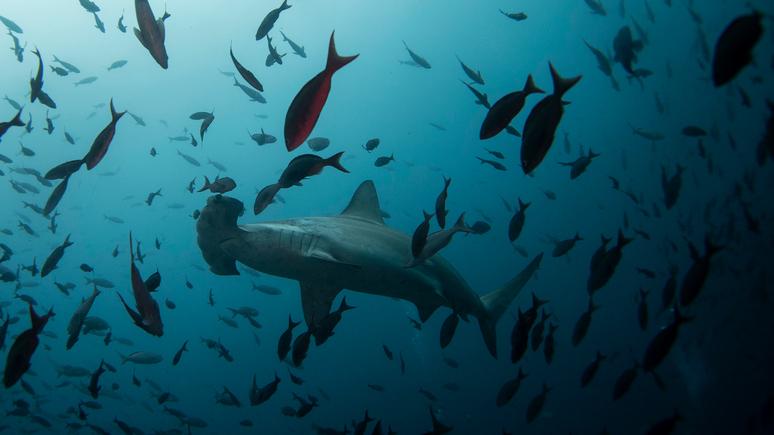 CNN: карантин дал морским животным редкую и недолгую возможность разгуляться