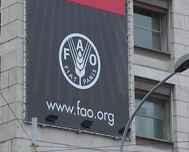 منظمة فاو تناقش سبل حل أزمة الغذاء في العالم