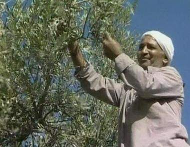 إصابة عدد من  الفلسطينيين  في بلعين