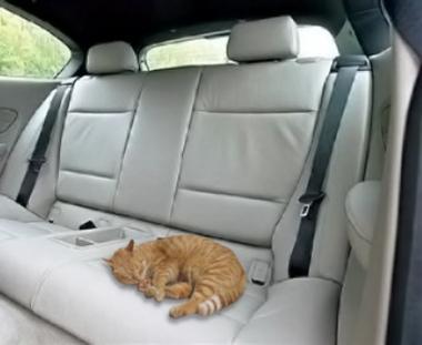 قطة وزير الدفاع الكرواتي تقطع 150 ألف كلم على متن سيارة BMW