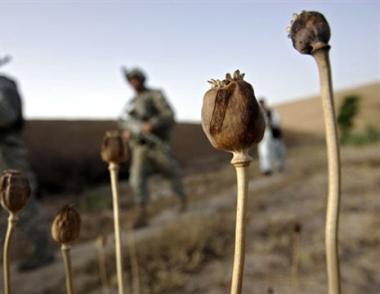 روسيا تطرح مشروع قرار خاص بمكافحة الاتجار بالمخدرات في أفغانستان