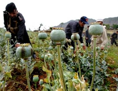 روسيا ستقدم للمجتمع الدولي خططا لمكافحة المخدرات الافغانية