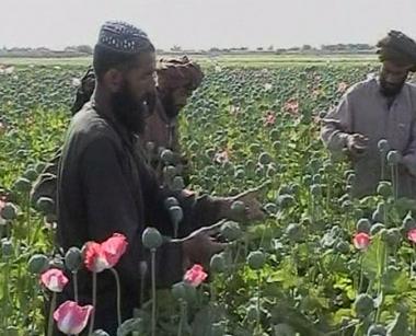 الناتو يرفض خطة روسية لمكافحة المخدرات الأفغانية