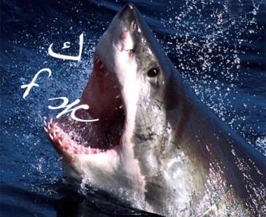 سمكة قرش ناطقة في اللاذقية على الساحل السوري