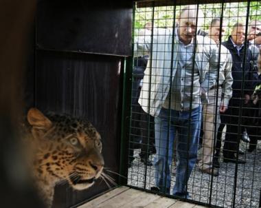 بوتين يطلع على برنامج إعادة توطين الفهود في محمية سوتشي