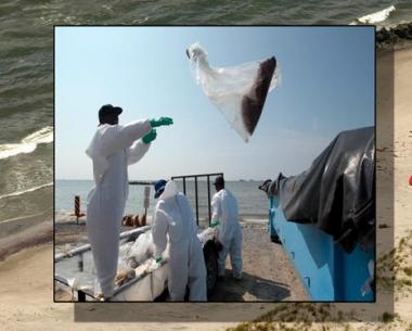 مستشارة الرئيس الأمريكي: التسرب النفطي في خليج المكسيك