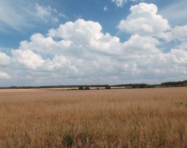 توقعات بخسائر مالية نتيجة تراجع محصول الحبوب في روسيا
