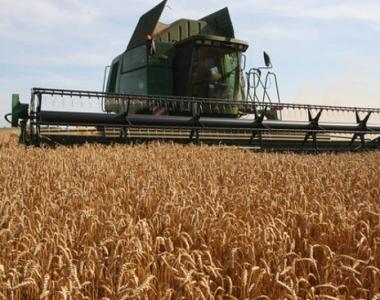 حظر الحكومة الروسية تصدير القمح يثير الذعر والفوضى في اسواق الغذاء العالمية
