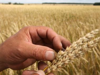 روسيا قد تعيد النظر في حظر صادرات الحبوب في أكتوبر/تشرين الأول