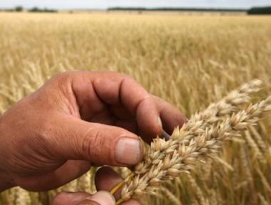 الحظر المؤقت على تصدير الحبوب من روسيا يدخل حيز التنفيذ