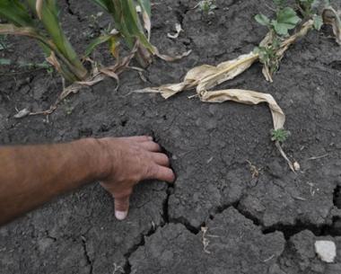 مدفيديف: على الحكومة ان تعمل على تجنب دعم المزارع المتضررة على حساب المزارع التي لم يطلها الجفاف