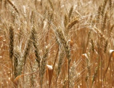 روسيا تمدد الحظر على تصدير الحبوب حتى يوليو القادم
