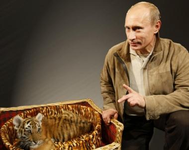 بوتين يعلن استعداد روسيا لمساعدة إيران وكازاخستان للحد من تقلص أعداد النمور على أراضيها