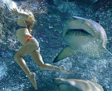 السلطات المصرية تعلن عن قتل سمكة قرش هاجمت السياح قرب شرم الشيخ وتمنع السباحة هناك خلال48 ساعة