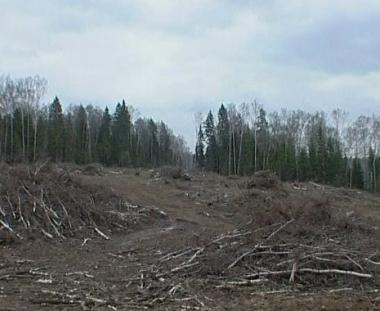 طريق سريع يخترق غابات ضواحي موسكو إلى بطرسبرغ