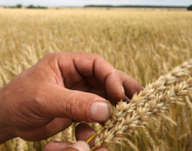 وزيرة الزراعة الروسية: الحظر على تصدير الحبوب للخارج اتاح المحافظة على التوازن في السوق الداخلية