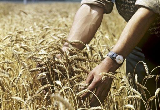 روسيا تقيم وضع محصول الحبوب وتؤيد رفع الحظر عن تصديرها