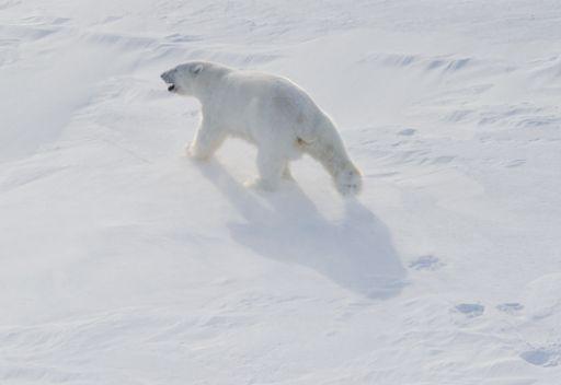 دول منطقة القطب الشمالي تقرر تعزيز الشراكة لمواجهة التحديات المشتركة
