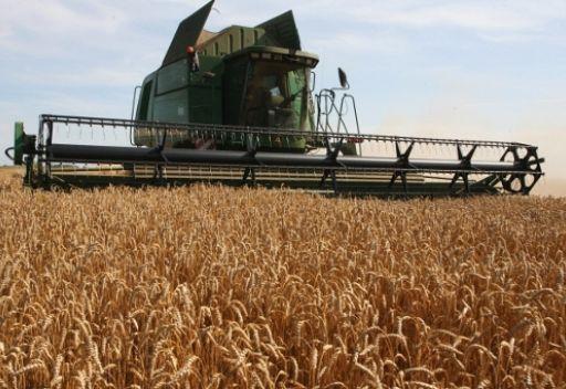 محصول الحبوب الروسي قد يبلغ 85 مليون طن العام الجاري