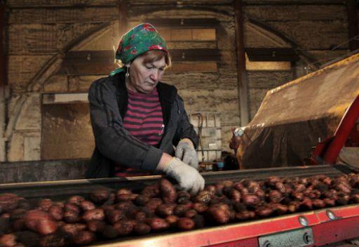 روسيا لن ترفع الحظر عن استيراد البطاطا من مصر قبل سبتمبر