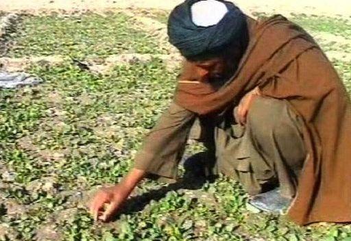 تقرير للامم المتحدة: تداول الهيروين في العالم بلغ 375 طن سنويا